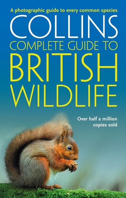 Collins Complete Guide - British Wildlife : A photographic guide to every common species