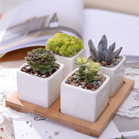 Set of 4 Minimalist Cube Flowerpots White Ceramic Succulent Planter Pot with Bamboo Stand for Cactus Mini Bonsai