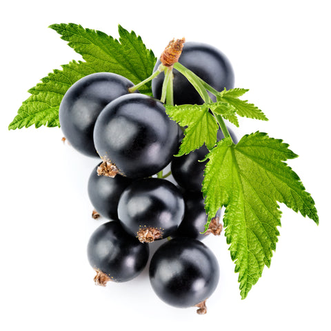 Black Currant - TFA