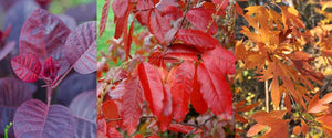 The Best Fall Color Trees for Your Yard