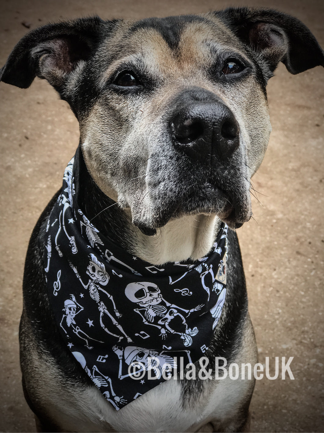 Dapper Dog Bandana #TheBeats