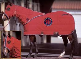 Horse Blanket - BIG D GRAND PRIX STABLE BLANKET/HOOD - BIG D - Mock Brothers Saddlery and Western Wear