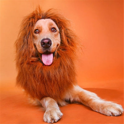 Majestic Lion King Wig