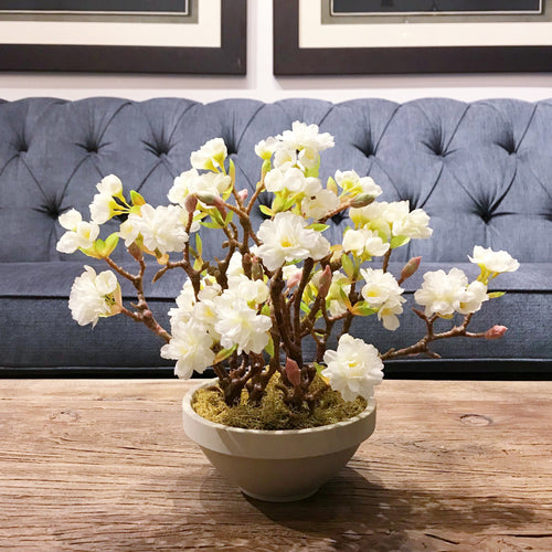 Bowl of Cherry Blossom - Decor Garden - SEO - Image