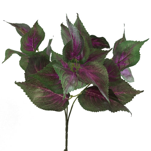 AL-010 - Coleus Bush<br>(Set of 3 - 6) - Decor Garden - SEO - Image