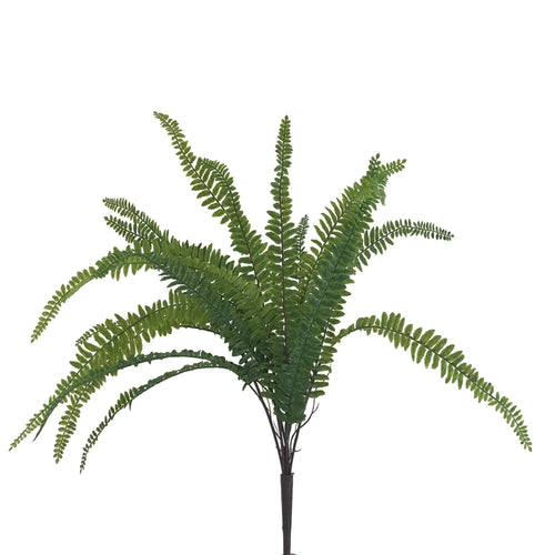 AL-023 - Boston Fern<br>(Set of 3 - 6) - Decor Garden - SEO - Image