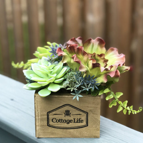 Box of Succulents - Decor Garden - SEO - Image