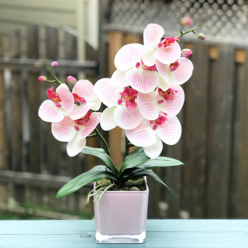 Pink Orchid Bloom