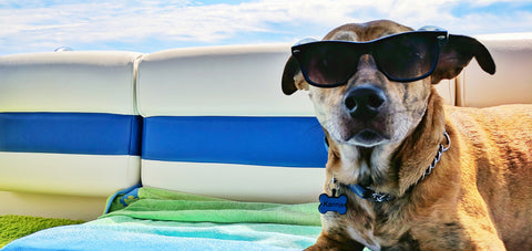 Boating With Dogs: Essentials and Creature Comforts