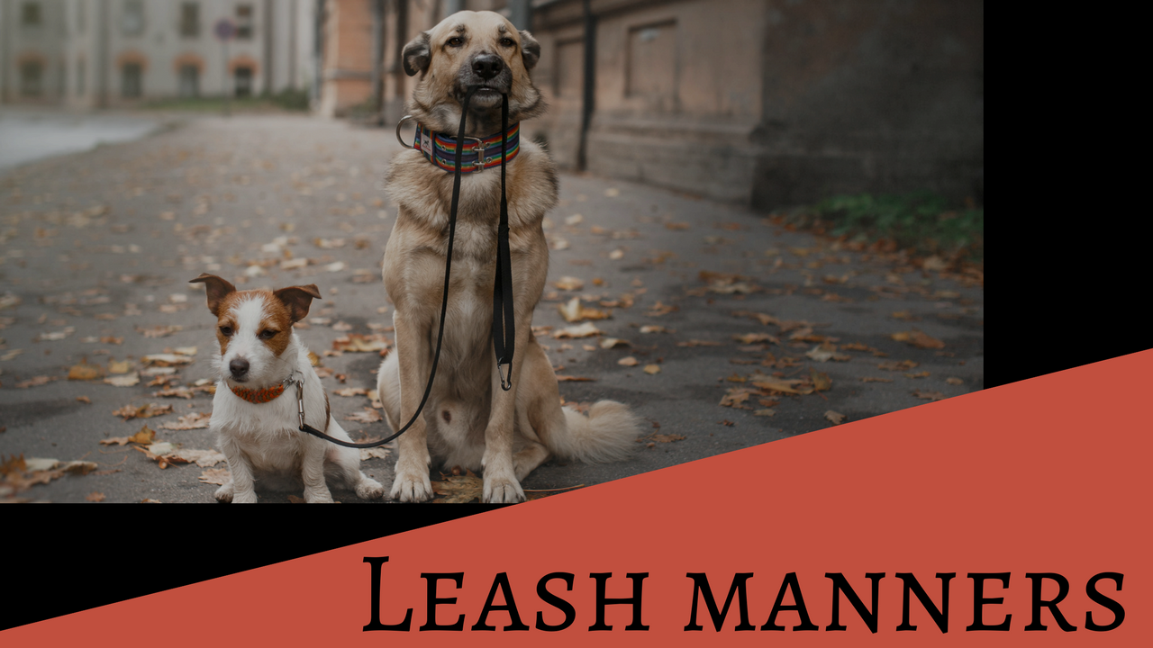 Leash Manners
