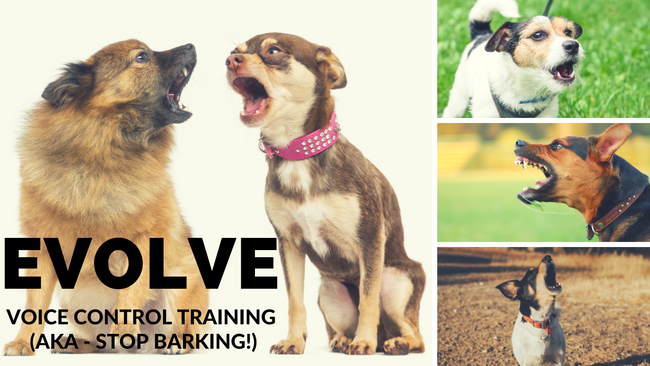 EVOLVE Voice Control Training