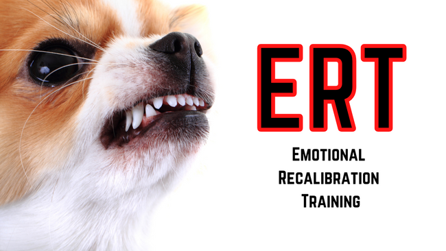 Emotional Recalibration Training (ERT)