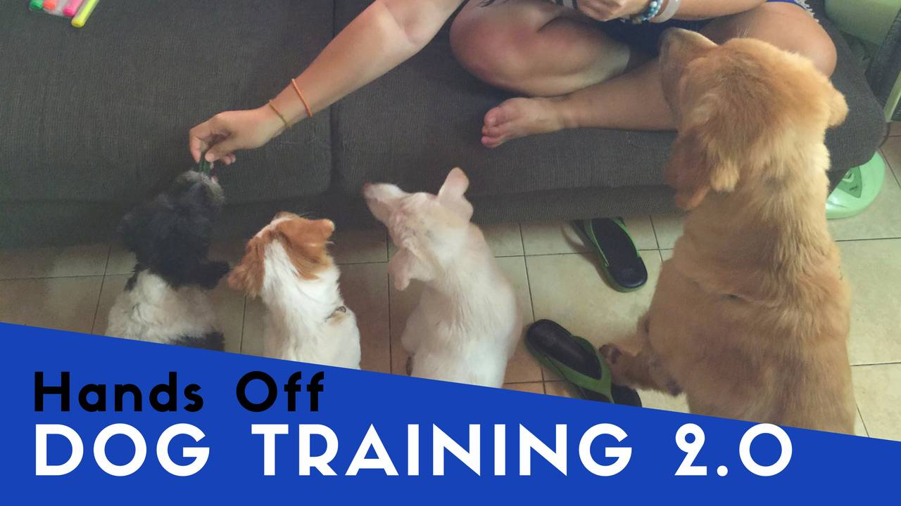 Hands Off Dog Training 2.0 - DIGITAL (Online)