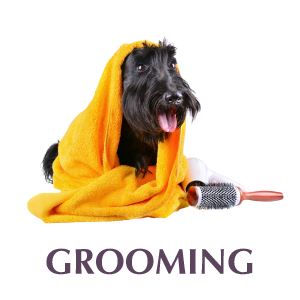 Boogie Time LV Grooming Services