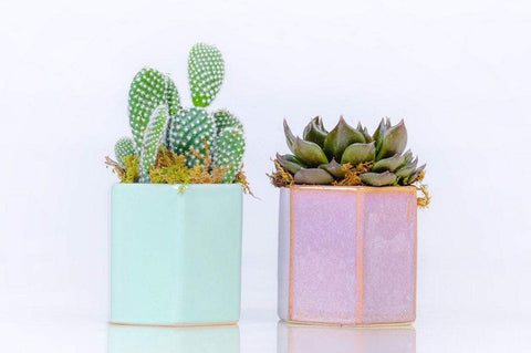 Ceramic modern Planter With Live 3 inch Succulent