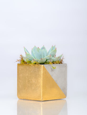 Concrete Gold Planter - Planter