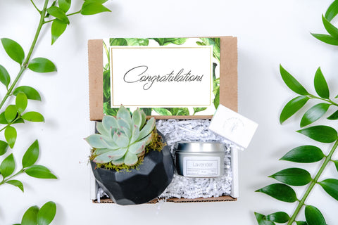 Congratulations Gift Box- a succulent in Black Geometric