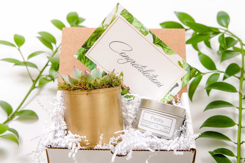 Congratulations Mini Gift Box- a succulent in Gold Metal
