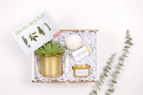 Gift Box - a live succulent in a Gold Metal planter a