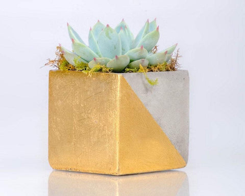 Gold Cement Planter With Live Succulent