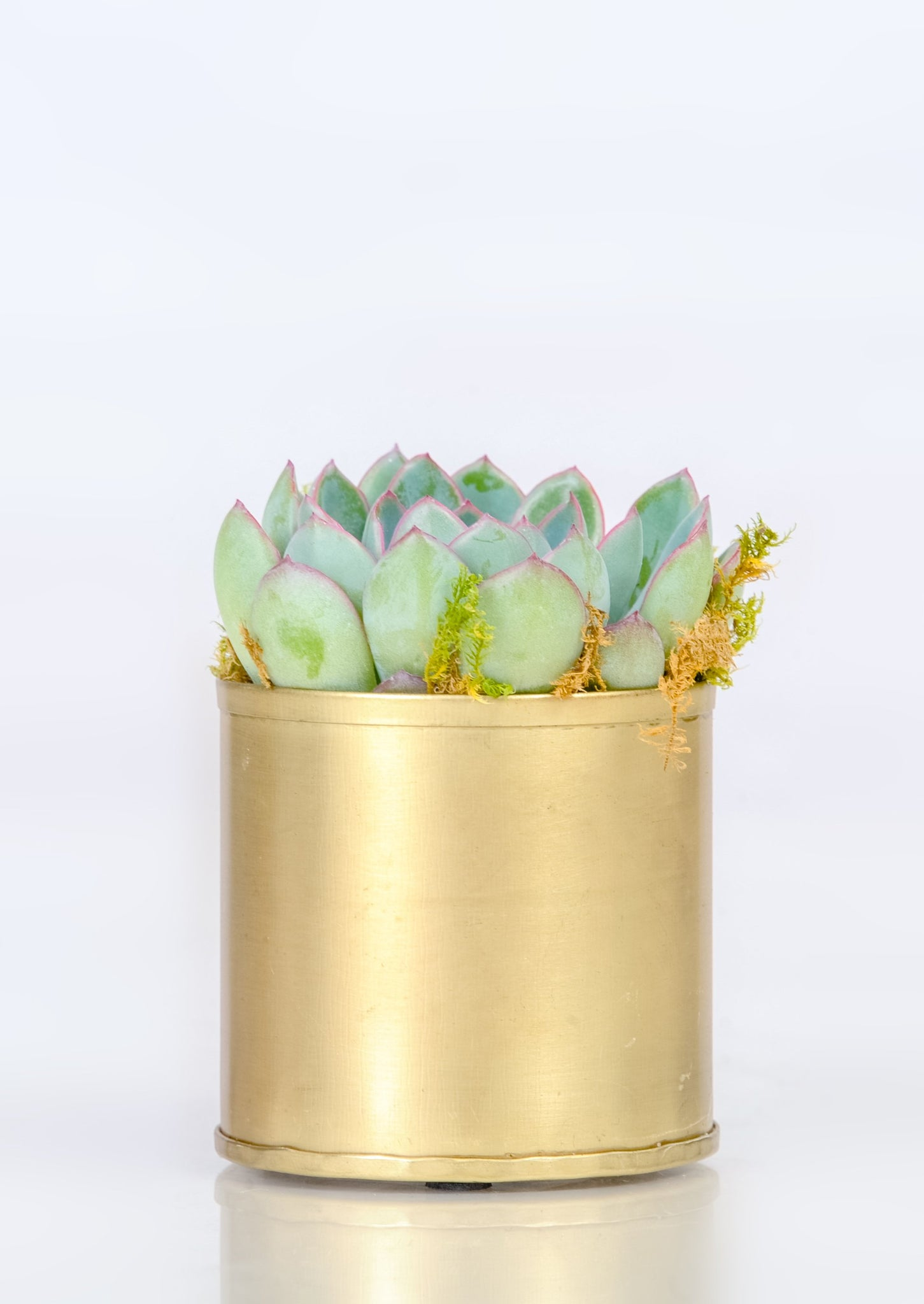 Golden Metal Planter - Planter
