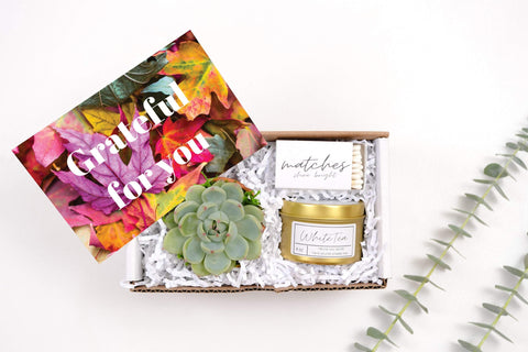 Grateful For You Mini Gift Box- a succulent in terra cotta