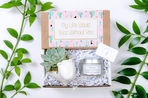 Succulent Gift Box |Trending Gift| Soy Candle Gift | Gift