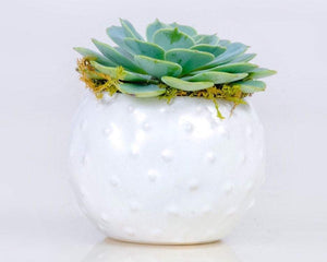 White Round Planter With Live 3 inch Succulent