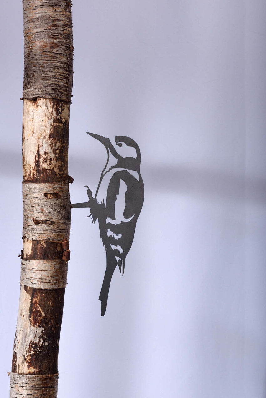 SWEET STEEL BIRD THAT SIILENTLY CHIRPS YEAR ROUND -WOODPECKER