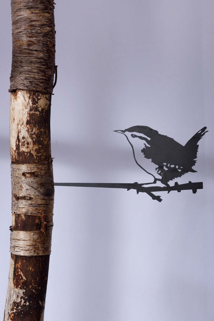 SWEET STEEL BIRD THAT SIILENTLY CHIRPS YEAR ROUND - WINTER WREN