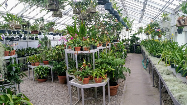 7 Of The Best Reasons For Why You Need A Greenhouse