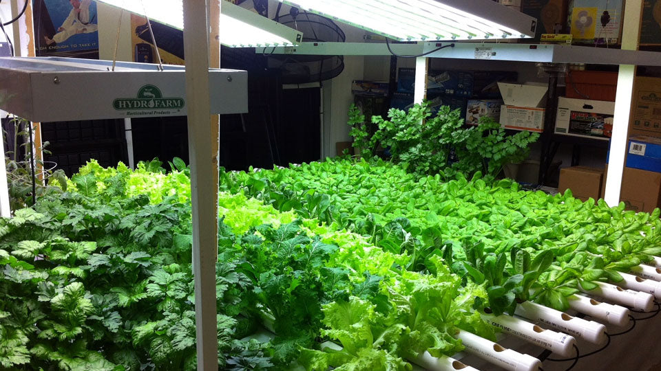 HYDROPONICS: Alternative Method For Gardeners