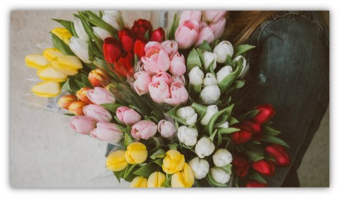 The meaning of tulip flowers
