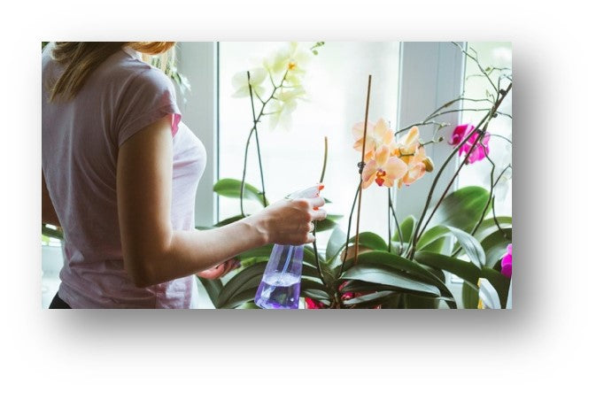 orchid how to look after