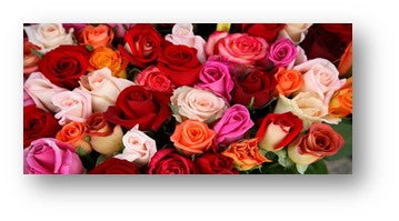 Roses for all occasions