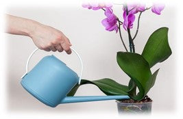 How often water an orchid