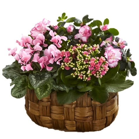3 Types Plant in Basket
