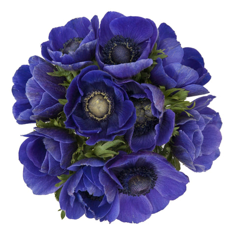 Blue Anemone Bouquet