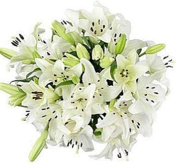 Bouquet of White Aztec Lily