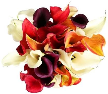 Calla Lily Mix Bouquet