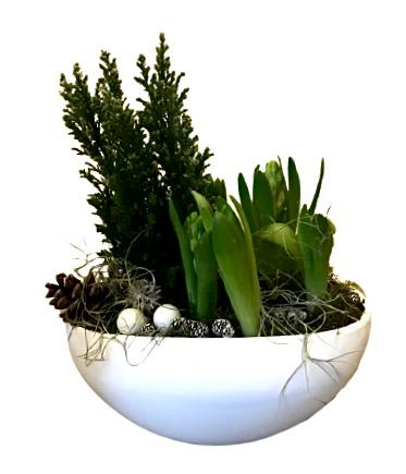 Christmas Pot with Hyacinth