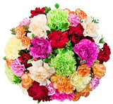Colored Carnations