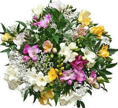 Colored Freesias with Gypsophila