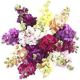 Colored Stock Bouquet