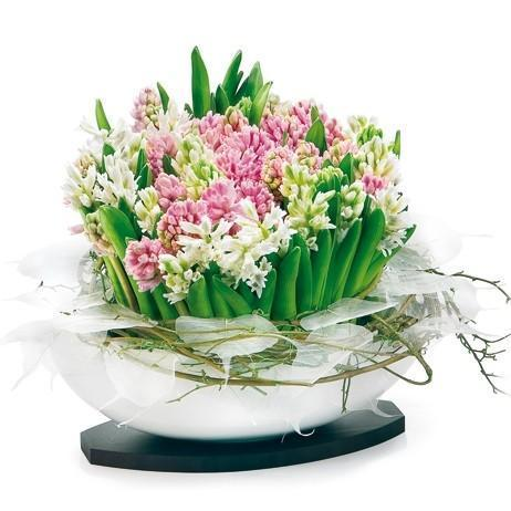 Hyacinths in Ceramic Elliptic Pot