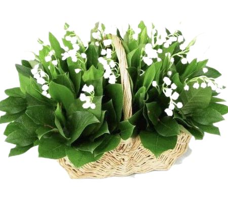 Lily of Valley with Greenery Basket