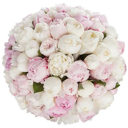 Luxury Pink & White Peonies