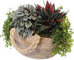 Mix Plant with Jute Basket