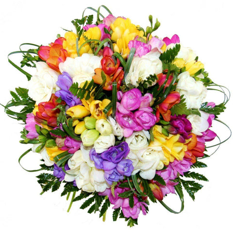 Multicolored Freesias with Greenery