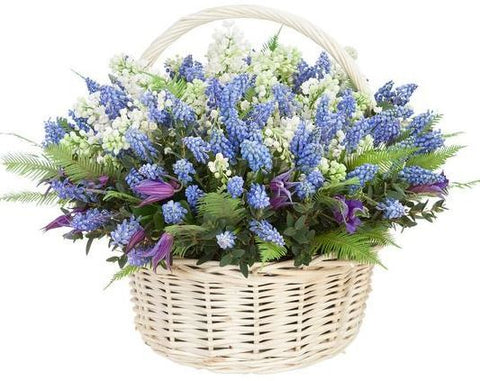 Muscari with Convallaria Basket